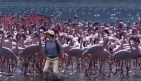 a-flamingo-gyerektv