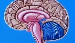 az-agy