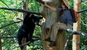 feketemedve-gyerektv