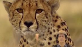 gepardok-gyerektv