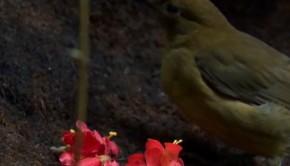 lugasepito-madarak-gyerektv