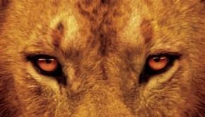 afrikai-macskak