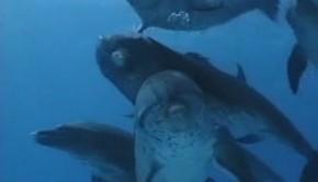 balnak-es-delfinek-gyerektv