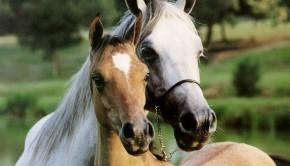 lovak-gyerektv