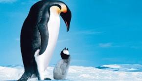 pingvinek-vandorlasa