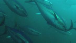 tonhal-gyeretkv