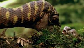 leaellynasaura-es-a-tojas-gyerektv
