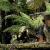 muttaburrasaurus-es-a-bogyok-gyerektv